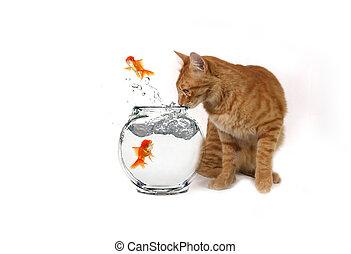 engraçado, imagem, de, gato, observar, escapando, peixe