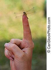 engraçado, libélula, ligado, a, mão
