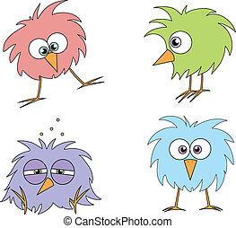 engraçado, pássaros