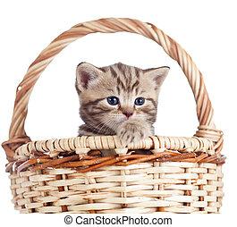 engraçado, pequeno, gatinho, em, cesta feito vime