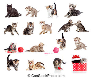engraçado, pequeno, gatinhos, collection., isolado, gatos, ...