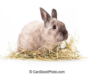 engraçado, pequeno, rabbit.