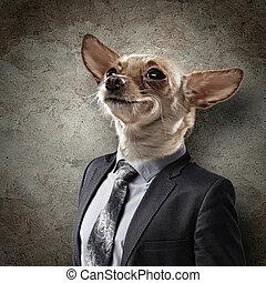 engraçado, retrato, de, um, cão, em, um, paleto