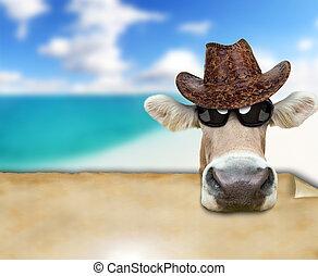 engraçado, vaca