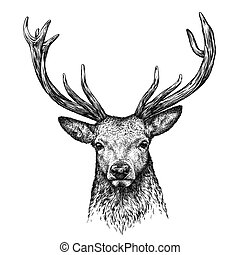engrave deer illustration - engrave isolated deer...