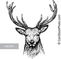 engrave deer illustration - engrave isolated deer vector...