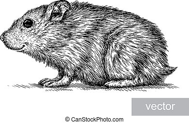 engrave hamster illustration - engrave isolated vector...