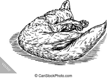 engrave ink draw fox illustration - black and white engrave...