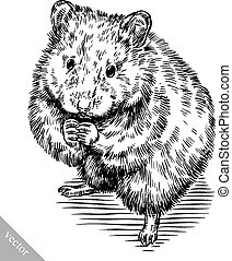 engrave ink draw hamster illustration - black and white ...