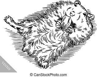 engrave ink draw hamster illustration - black and white...