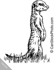 engrave ink draw meerkat illustration - black and white...