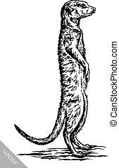 engrave ink draw meerkat illustration - black and white...