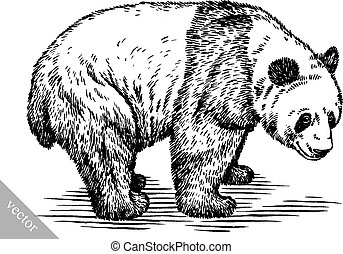 black and white engrave ink hand draw vector panda illustration