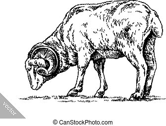 engrave ink draw sheep illustration - black and white ...
