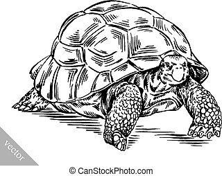 black and white engrave ink draw vector turtle illustration