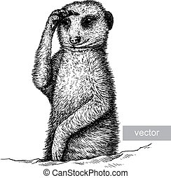 engrave meerkat illustration - engrave isolated vector...