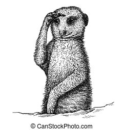engrave meerkat illustration - engrave isolated meerkat...