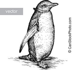 engrave penguin illustration - engrave isolated penguin ...