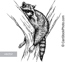 engrave raccoon illustration - engrave isolated vector...