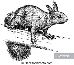 engrave isolated vector squirrel illustration sketch. linear art