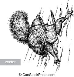 engrave squirrel illustration - engrave isolated vector...