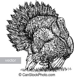 engrave turkey illustration - engrave isolated vector turkey...