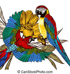 Engraved background with colorful tropical parrots - Couple...