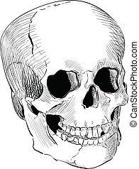 Engraved human skull