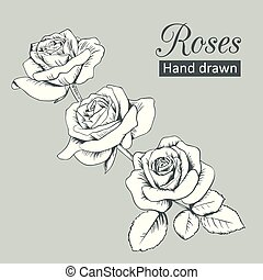 Engraved roses with leaves isolated on grey background. Vector illustration