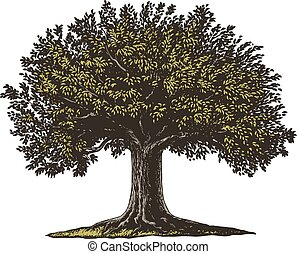 Engraved Tree - Vector illustration of a fruit tree in...