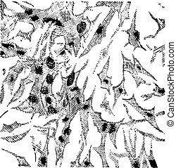 engraving., årgång, myxoma