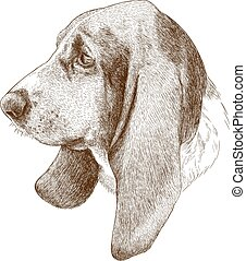 engraving antique illustration of basset hound head - Vector...
