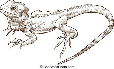 Vector antique engraving drawing illustration of crested basilisk or green basilisk or Jesus Christ lizard isolated on white background