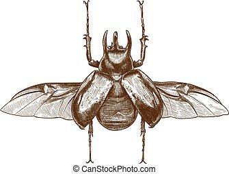 engraving antique illustration of rhinoceros beetle - Vector...