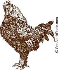 engraving antique illustration of rooster