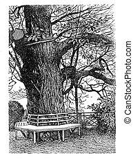 Engraving, bench in ornamental garden