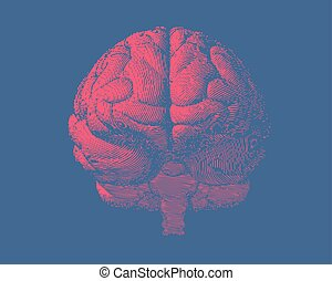 Engraving brain illustration in front view on blue BG