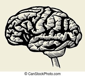 Engraving brain illustration