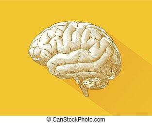 Engraving brain illustration on yellow BG