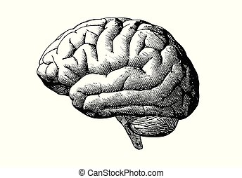 Engraving brain with black on white BG