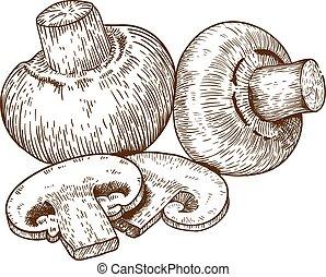 engraving champignons - engraving vector illustration of...