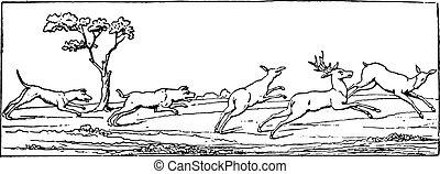 engraving., chasse, vendange, cerf
