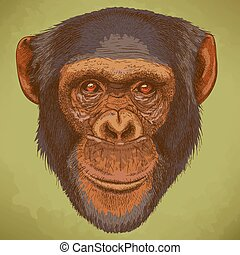 engraving chimpanzee head - Vector engraving illustration of...