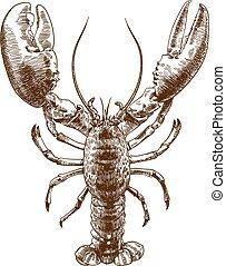 engraving drawing illustration of big lobster - Vector...