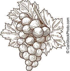 engraving grapes on the branch