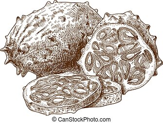 engraving horned melon - Vector engraving drawing antique ...