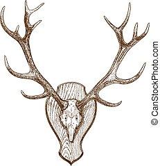 engraving illustration animal skull