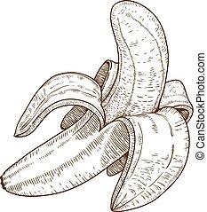 engraving illustration of banana