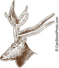 engraving illustration of big deer head