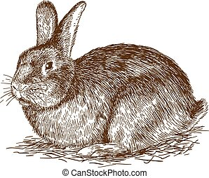 Vector antique engraving drawing illustration of bunny isolated on white background